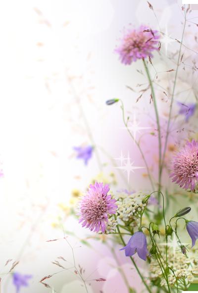 fiori.png